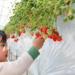 【休日のお出かけに】大阪南部のおすすめ農園・直売所5選