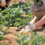 新規就農への第一歩!就農に関する情報収集・相談・体験の方法