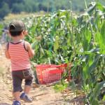 夏は「野菜狩り」へ!人気の野菜やオススメの農園特集