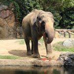 天王寺動物園で野菜がアツい!イベントレポート
