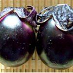 伝統野菜in山形 薄皮丸ナス