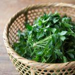 伝統野菜in山形 うこぎ