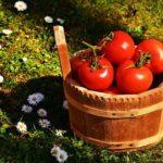 10月10日は「トマトの日」